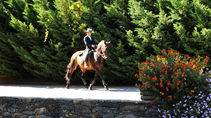 Dressage Clinics with Lusitanos