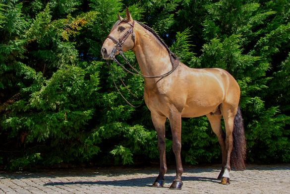 Estágios Equitação