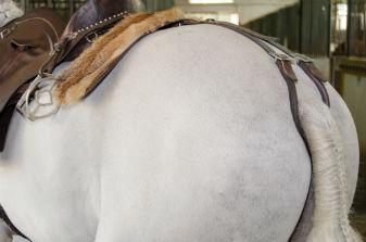 Alojamento e Ensino Equitação
